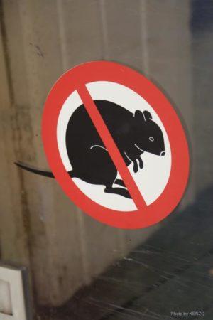 stop-quokka