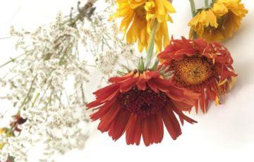 ドライフラワー,手づくり,ガーベラ,かすみ草,ものづくり,花,