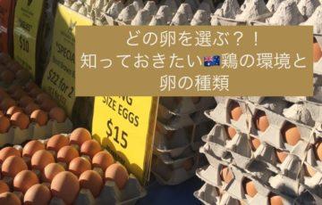 卵,エッグ,オーストラリア,フリーレンジエッグ,ファーマーズマーケット,西オーストラリア,マーガレットリバー